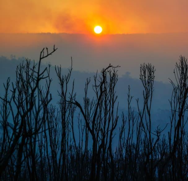 Blundstone Support For Australian Bushfire Crisis
